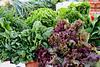 Green,red,lettuce