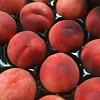 Tri Lite Peach Plum Hybrid