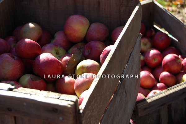 Crates of apples for sale at the farmers market.