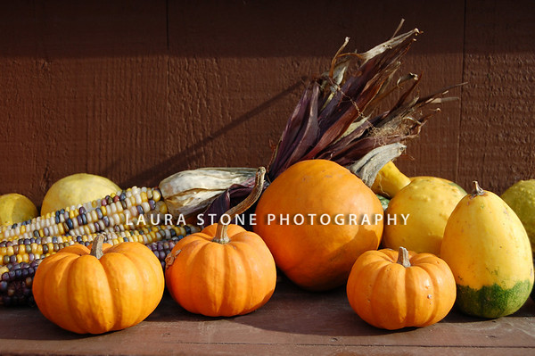 An assortment of mini pumpkins, squash and Indian Corn on the shelf in an outdoor market