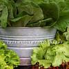 Fresh lettuce and garden greens.