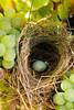 Nest_2707