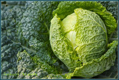 July 11, 2011. Kale, Lettuce, Cabbage, I'm not sure what this is, but it looks pretty!  Agecroft Hall. Richmond, VA.