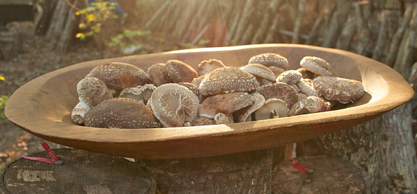 Crider Shiitake Mushrooms!