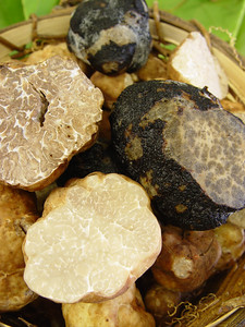A mixture of mature and immature spring truffles as well as frozen blacks