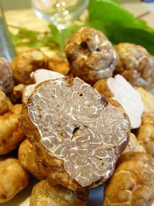 Mature Spring Truffle closeup with immature cut truffle in background