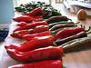 Serrano, jalapeno, cayenne, anaheim and Corno Torro di Rosso pepper day!