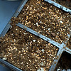 "Radish seeds are sprinkled over a full container of soil.<br /> Karim Amirfathi,  owner of Altan Alma in Louisville, shows some of the microgreens grown at his business.<br /> For more photos and  a video on planting greens, go to  <a href=""http://www.dailycamera.com"">http://www.dailycamera.com</a>.<br /> Cliff Grassmick/ February 23, 2011"