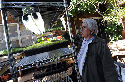 Karim Amirfathi,  owner of Altan Alma in Louisville, talks about the lighting for the microgreens grown in his greenhouse. For more photos and a video on planting greens, go to www.dailycamera.com. Cliff Grassmick/ February 23, 2011