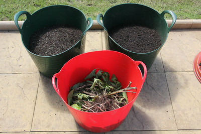 Shoots for composting and recovered soil. 5 July 2014