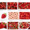 """<a href=""""https://fruitsname.blogspot.com/p/fruits-that-start-with-s.html"""">https://fruitsname.blogspot.com/p/fruits-that-start-with-s.html</a><br /> <br /> strawberries<br /> <a href=""""https://salphotobiz.smugmug.com/search#q=strawberries&i=0"""">https://salphotobiz.smugmug.com/search#q=strawberries&i=0</a>"""