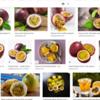 """Passion fruit<br /> <br /> <a href=""""https://salphotobiz.smugmug.com/Food/Healthier-Snacks-and-Foods/i-kqtdqQc"""">https://salphotobiz.smugmug.com/Food/Healthier-Snacks-and-Foods/i-kqtdqQc</a><br /> <br /> patience<br /> <a href=""""https://salphotobiz.smugmug.com/Other/Inspirational-Bible-Verses/i-BJS9Pxg"""">https://salphotobiz.smugmug.com/Other/Inspirational-Bible-Verses/i-BJS9Pxg</a>"""