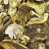 dried mushrooms, dry mushrooms high resolution photo made with Macro 50mm f/2.8 1:1 lens. This image will make nice decoration or illustration for publish.<br /> Image is copyrighted by Stan Pustylnik.