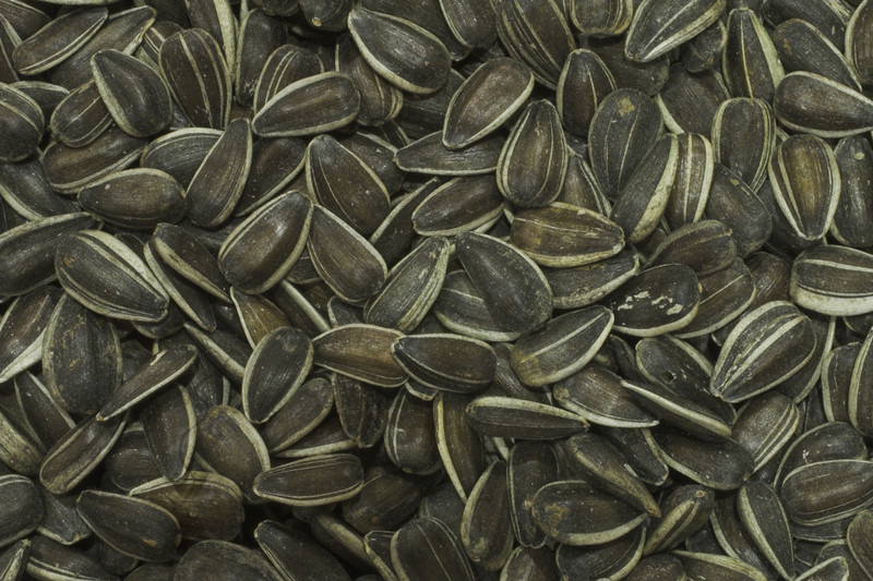 sunflower seeds high resolution photo made with Macro 50mm f/2.8 1:1 lens. This image will make nice decoration or illustration for publish.<br /> Image is copyrighted by Stan Pustylnik.