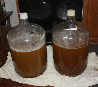 Ten gallons of beer eady for fermenting.  The is two variations on a pale ale recipe.