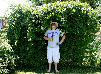 Monster hop plant #2.