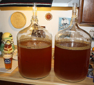 Brews have fermented and cleared nicely.  These will be around 3% alcohol by volume.