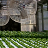 Sweetwater Growers