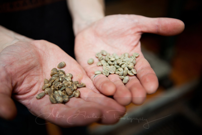 Coffee beans, pre roast