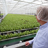 Founder & CEO Paul Sellew of Carlisle, in Little Leaf Farms' three-acre greenhouse for growing organic baby lettuce, which is sold fresh-picked around New England. (SUN/Julia Malakie)