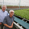 Founder & CEO Paul Sellew of Carlisle, and EVP of Sales & Marketing Tim Cunniff of Hudson, N.H., in Little Leaf Farms' three-acre greenhouse for growing organic baby lettuce, which is sold fresh-picked around New England. (SUN/Julia Malakie)