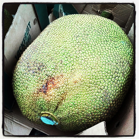 Globe/T. Rob Brown<br /> A whole jack fruit, this one weighs 64 pounds for sale Wednesday morning, Aug. 7, 2013, at Marian Days in Carthage. Jack fruit costs $2 per pound which means this particular one sells for $128.