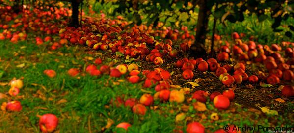 Lohr's Apple Orchard