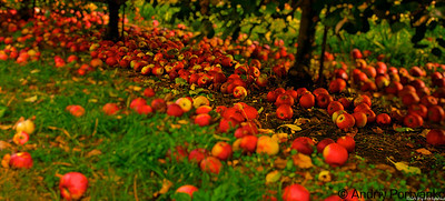 Lohr's Apple Orchard