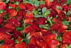 110212 - 7775 Strawberries - Farmers Market -  Coral Gables, FL