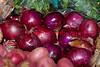 110212 - 7750 Onions - Farmers Market -  Coral Gables, FL