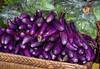 110212 - 7767 Eggplants - Farmers Market -  Coral Gables, FL
