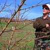 Bill Broderick the owner of Sunny Crest Orchards in Sterling showed off his peach trees and talked about how they will not bear fruit this year. SENTINEL & ENTERPRISE/JOHN LOVE