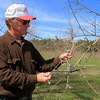 Bill Broderick the owner of Sunny Crest Orchards in Sterling looks over some of his apple trees he has and said that they are not as they should be but they will have fruit this year. His peach trees will not bear fruit this year. SENTINEL & ENTERPRISE/JOHN LOVE