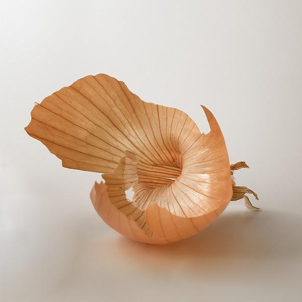 Onion Study 13