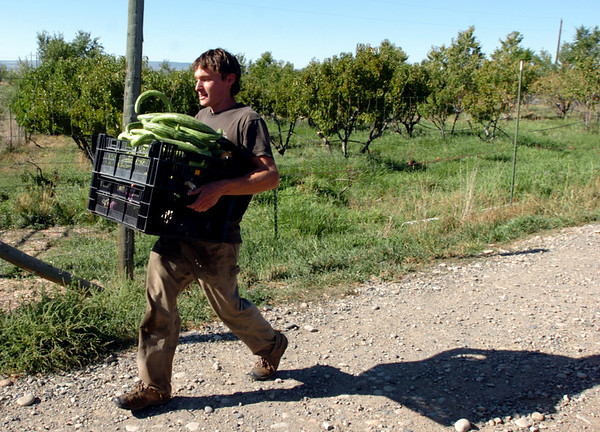 Adam McKinley of Zephyros Farm comes back with produce to be used in the final meal.<br /> Students from the Culinary School of the Rockies spend 10 days in Paonia, CO and the surrounding area learning where food comes from.<br /> <br /> <br /> Cliff Grassmick/ September 16, 2008