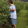 JUly 20, 2021 -- Pick your own blueberries is underway at Doe Orchards in Harvard, and is expected to run through mid-August. Kim Drudi of Fitzwilliam, N.H., picks blueberries.  SUN/Julia Malakie