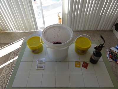 After we collected over 10lbs of prickly pear hearts, we grab the remaining ingridents, 24lbs of honey, yeast, and nutrients for the yeast. This picture was taken the day after preparing all the prickly pears. Hobbes in the back ground.