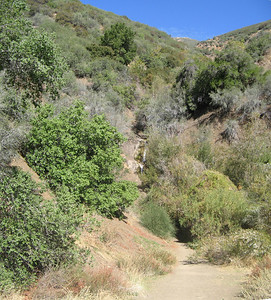 This is Belly Ache Springs located on Highway 33 North of Ojai. This is where I got the water used for the mead.