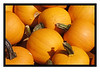 Pumpkins & Gords : Foods of Fall