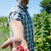 Mike Meehan, Farm Manager of Sholan Farms in Leominster, prepares for the upcoming blueberry and raspberry picking season. SENTINEL & ENTERPRISE / Ashley Green