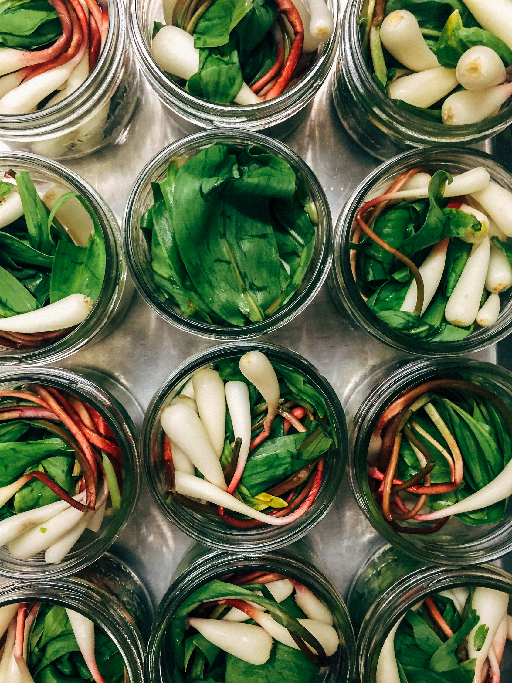 wild ramps in a canning jars to become pickled ramps