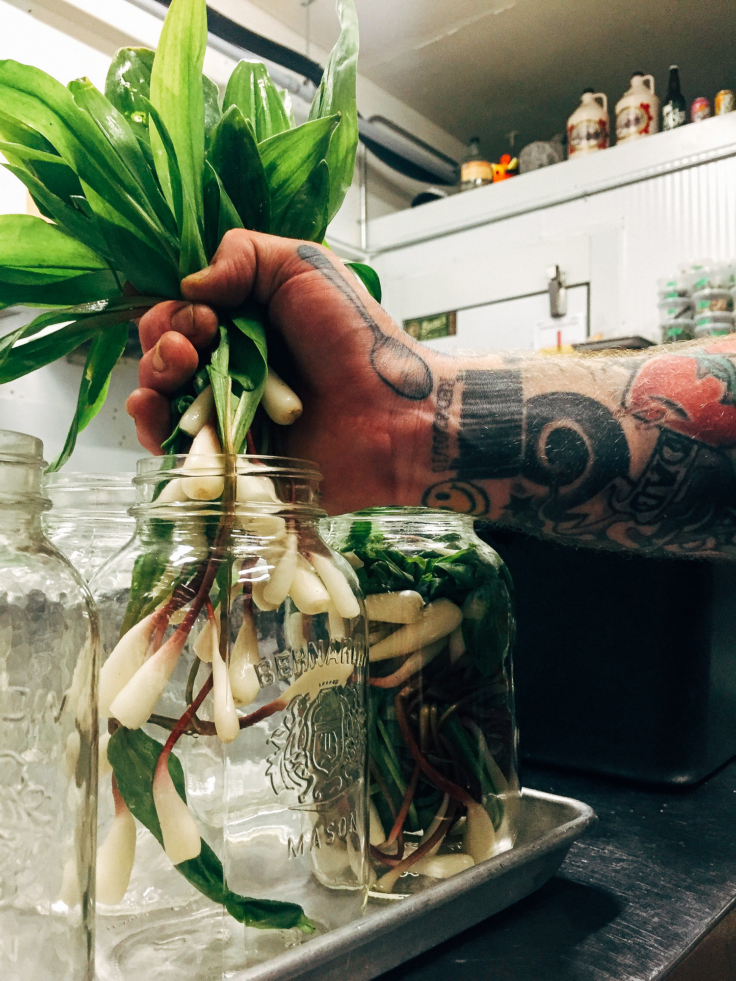 Pickled ramps are so easy to make and you can preserve the wild leek flavor all year long.