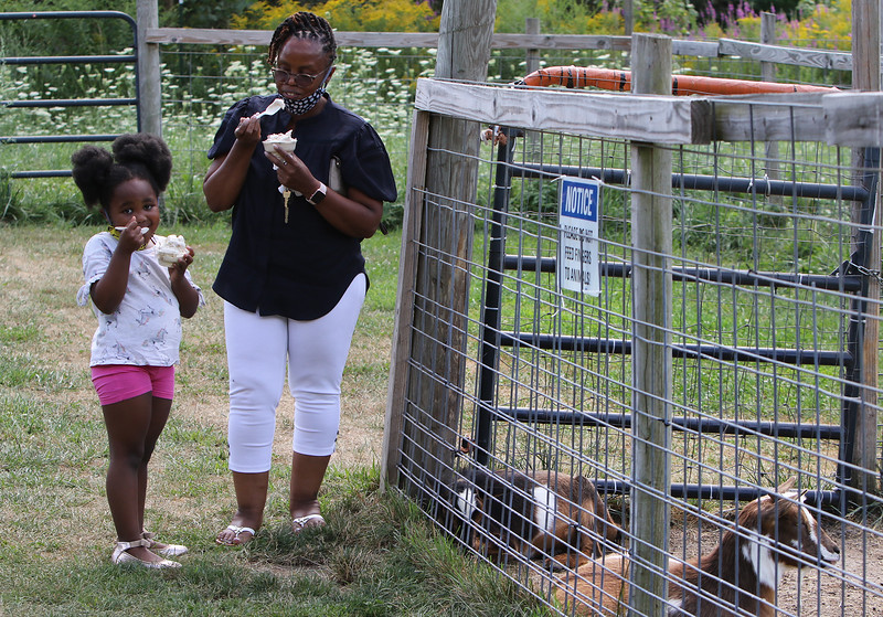 Pitty Wamae and her granddaughter Nailantei Lemunke, 4, both of Haverhill, visit the goats as they eat ice cream at Shaw's Ice Cream in Dracut. (SUN/Julia Malakie)