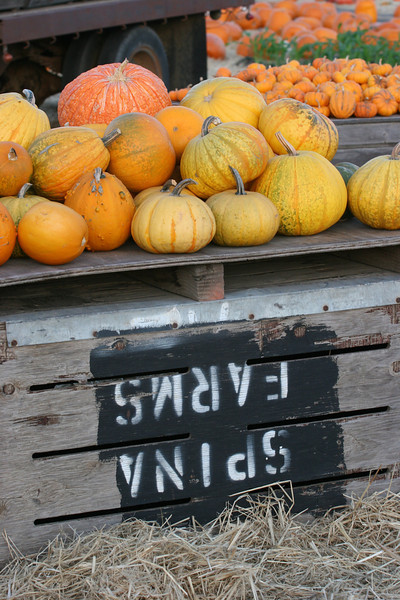 Our first close up look at pumpkins this season.