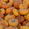 Small pumpkins.