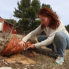 Laetitia Won of Tewksbury started her edible landscaping business, Earthling on the Loose, to help people make their soil healthy and grow food. Lifting up a section where she's sheet mulching to create healthy soil reveals insects, earthworms, and white threads of fungus which are breaking down leaves into food that plants can use. (SUN/Julia Malakie)