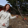 Laetitia Won of Tewksbury started her edible landscaping business, Earthling on the Loose, to help people make their soil healthy and grow food. This is an Asian pear tree, which produces much larger pears than the American variety.(SUN/Julia Malakie)