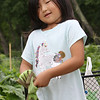 Mihee Park of Westford and her son Dohyun Yoon, 9, and daughter Dana Yoon, 6, work in their plot at the Westford Community Garden. Dana Yoon puts on gloves to pull Korean radishes. (SUN/Julia Malakie)