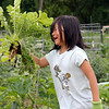 Dana Yoon, 6, of Westford, with a Korean radish, an ingredient in kimchi, in her family's plot at the Westford Community Garden. (SUN/Julia Malakie)