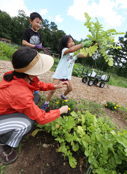 Mihee Park of Westford and her son Dohyun Yoon, 9, and daughter Dana Yoon, 6, work in their plot at the Westford Community Garden. Dana had just pulled up a Korean radish, which Park uses to make kimchi. (SUN/Julia Malakie)